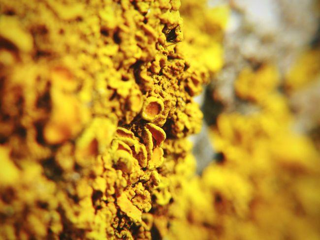 Beach Macro Moss