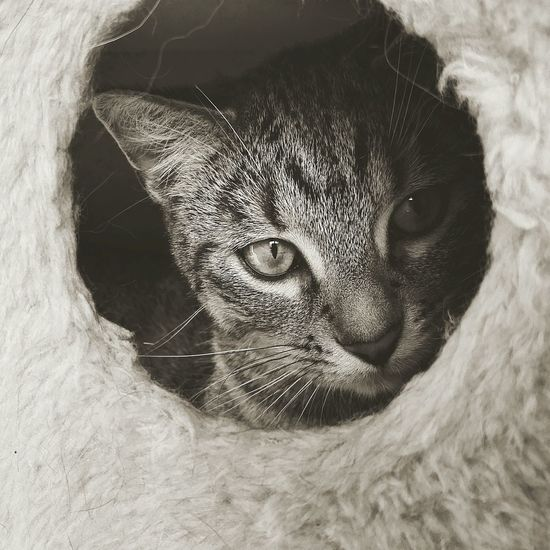 Close-up of cat looking through hole