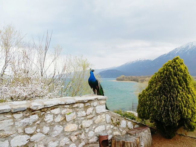 Peacock Travel Photography Peaceful Landscapes Inspirational Ohrid Lake Macedonia Church Outdoors Lake Travel EyeEm Best Shots The Great Outdoors - 2016 EyeEm Awards