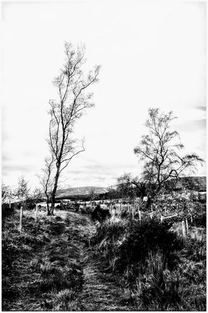 Nature Outdoors Beauty In Nature Tree Beauty Pathway Hills And Valleys Textured  Cloud - Sky Autumn Colors Scenics Antumn Landscape Backgrounds Rural Scene Kirriemuir Countryside Built Structure Black And White