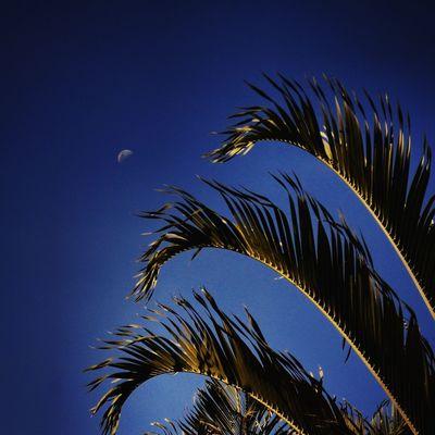 Moon Lua  Nature Natureza Coqueiro CeuAzul Sky Brasília Blue Skyporn