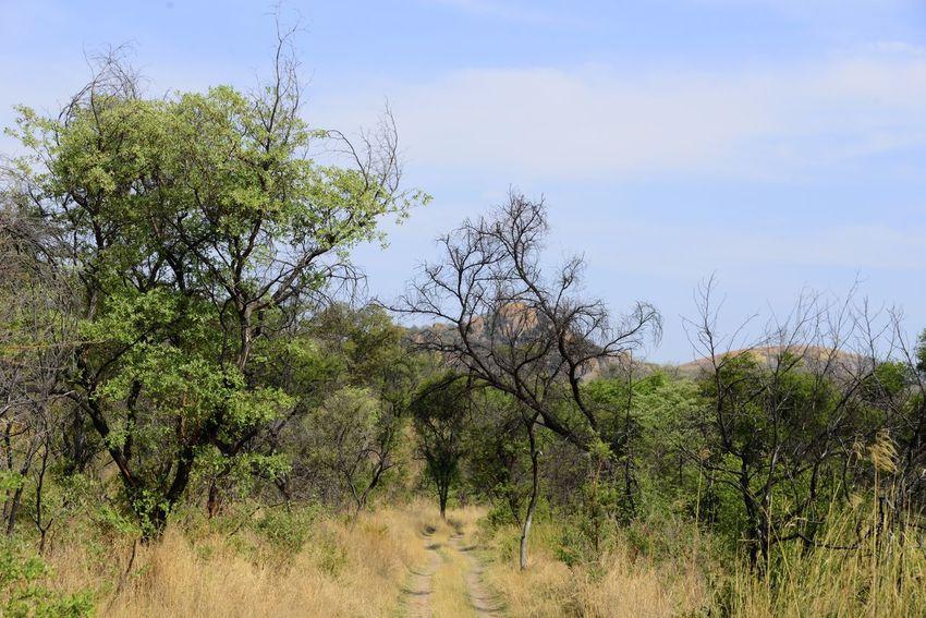Rhodes Matopos National Park MatopoHills National Park Rhodes Tree UNESCO World Heritage Site Zimbabwe Africa Landscape Rhodes Matopos National Park Unesco