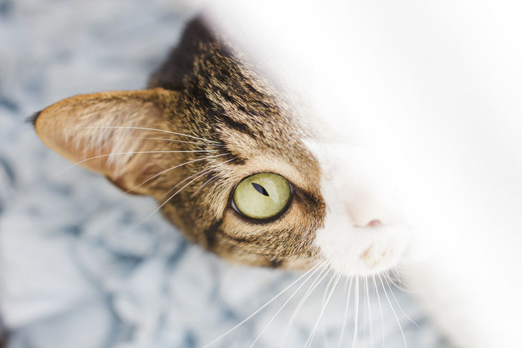 Cat Animal Eye Animal Themes Close-up Day Domestic Animals Domestic Cat Eye4photography  EyeEm EyeEm Best Shots EyeEm Gallery Feline Indoors  Mammal No People One Animal Pets Whisker Yellow Eyes EyeEmNewHere Pet Portraits