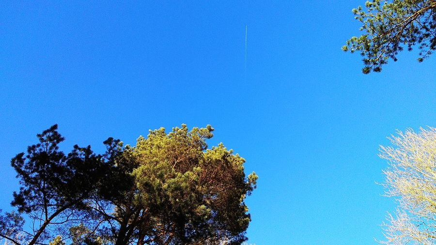 Bluesky Sky