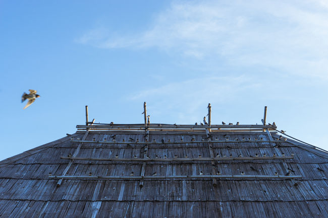 Architecture Bird Bird Photography Birds Building Exterior Built Structure Chiang Mai   Thailand Day Low Angle View Mae Ngat No People Outdoors Sky Thai Thailand