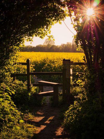 Countryside stile Tree Sunset Sunlight Shadow Sun Sky Countryside Scenics