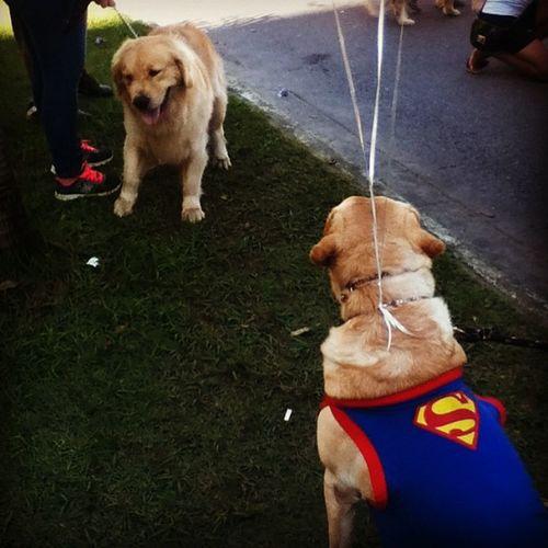 Dog Parade / Cãominhada!! ? ❤ Superdog Dog Cute Parade love adorable sweet fun brazil beach boy girl cute