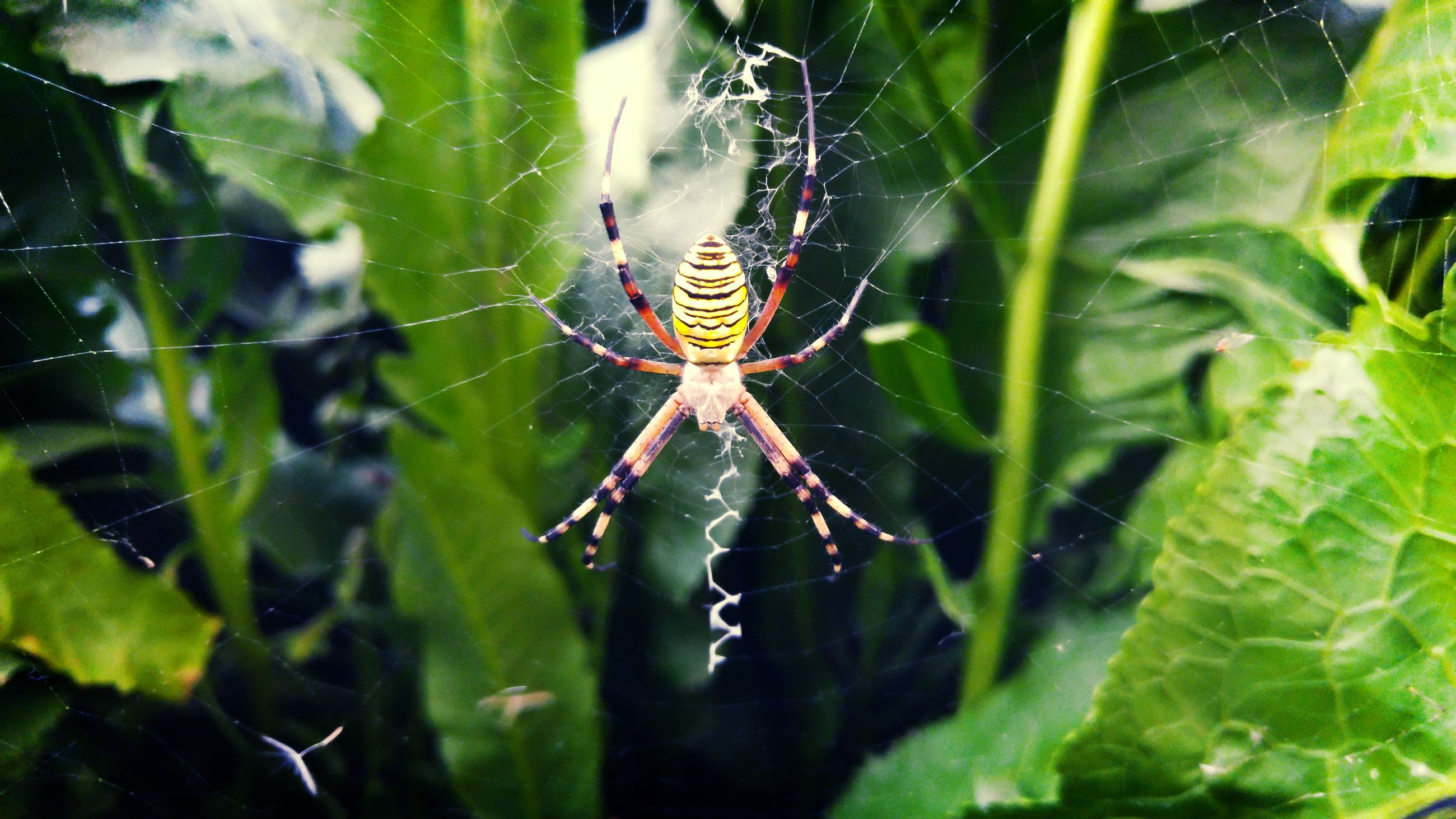 spider web, spider, fragility, one animal, close-up, web, spinning, animal themes, nature, survival, animals in the wild, beauty in nature, focus on foreground, outdoors, insect, animal leg, no people, intricacy, day, weaving, complexity, animal wildlife