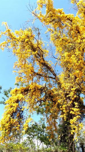 Low Angle View Nature Tree Outdoors Sky yellow
