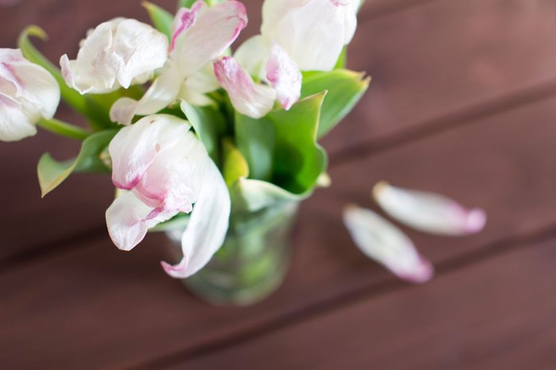 Wilted flowers in a vase on wooden table Aging Dead Plant Dry Flower  Old Sadness Depression - Sadness Wooden Pink Flowers White Flower Tulips Bouquet Wilted Plant Faded Beauty Fade Flower Flowering Plant Plant Beauty In Nature Freshness Petal Close-up Fragility Vulnerability  Flower Head Selective Focus