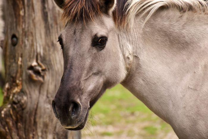 White horse One Animal Close-up Animal Head  Mammal Animal Themes Animal Wildlife Animals In The Wild Domestic Animals Nature Animal Photography Wildlife Beauty In Nature No People Wildlife & Nature Horse Photography  White White Horse White Horse Portrait Wildlife Photography Outdoors Tarpan Zoo Day Horse Animal