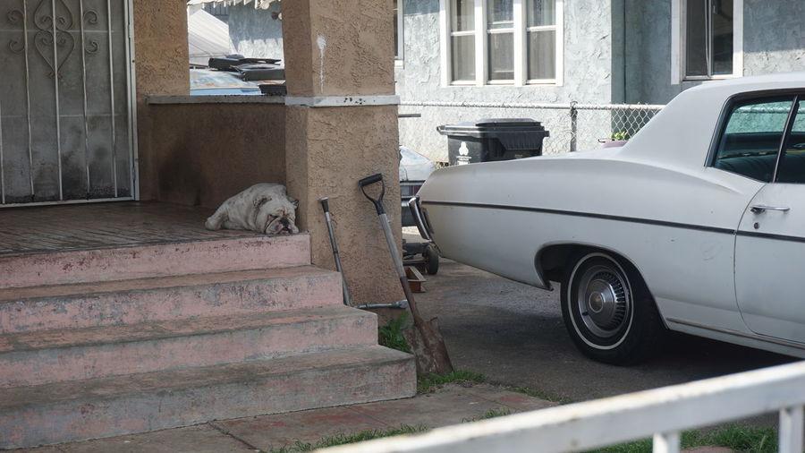 Pixxzo Pets Letsleepingdogslie Dogs Life Dog Sleeping