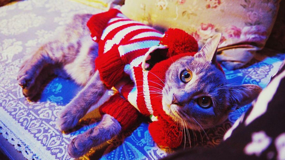 MerryChristmas 20151225 Cat