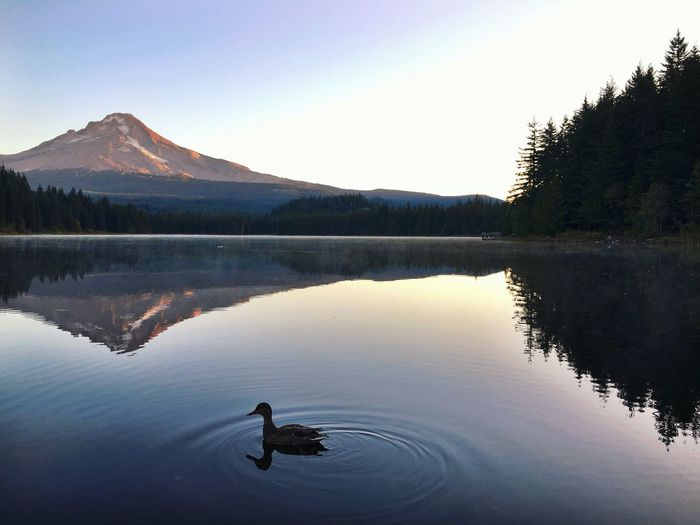 Scenic Reflection Of Mountains In Trillium Lake