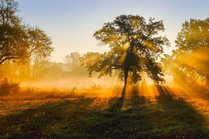 Sun rays Plant Tree Beauty In Nature Scenics - Nature Tranquility Tranquil Scene Sky Nature Growth Sunset Sunlight Sun No People Landscape Environment Land Idyllic Silhouette Non-urban Scene Capture Tomorrow