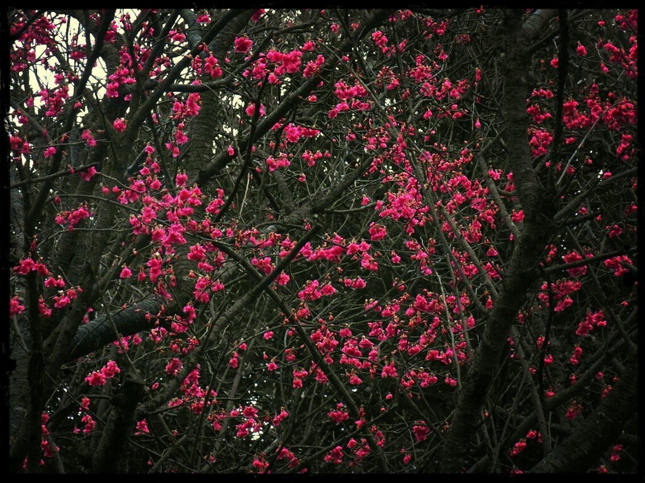 botanical, red, foliage, shrub, spring, blossom, vegetation, colorful, bush, garden, summer, botany, green, flower, growth, railing, no people