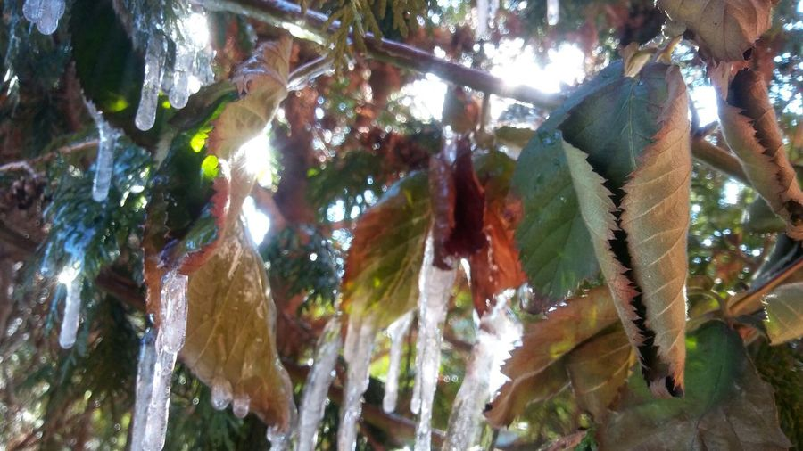 Low angle view of leaves hanging on tree