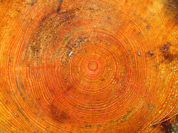 Baum Baumstamm Baumstumpf Braun Brown Bäume Eye4photography Makro EyeEm Best Shots EyeEm Best Shots - Macro / Up Close EyeEm Macro Eyeem Natur Lover EyeEm Nature Lover Macro Macro Nature Macro Photography Macro_collection Macrophotography Makro Makro Photography Makro_collection Nature Stump Tree Tree_collection  Macro Beauty