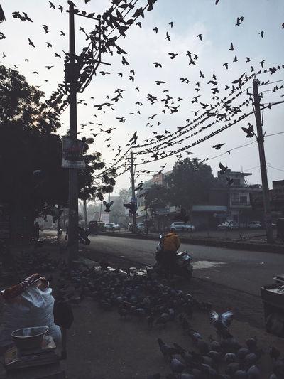 Birds on street in city against sky