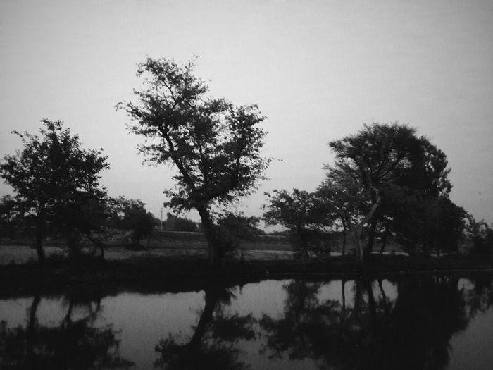 Evening Shadows OpenEdit Evening Light Shadowplay Hugging A Tree Not Vintage :) Me, My Camera And I EyeEm Nature Lover CameraFV5