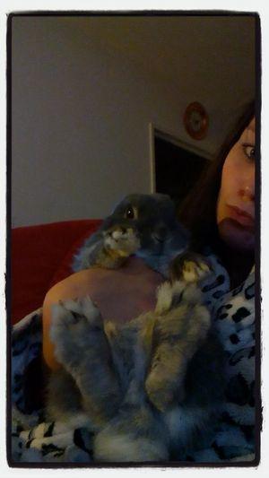 Mon Petit Coeur Ma Boule De Poil Pet Photography  Pet Love mon bebe chouky ??