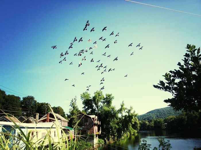 Birds Water_collection
