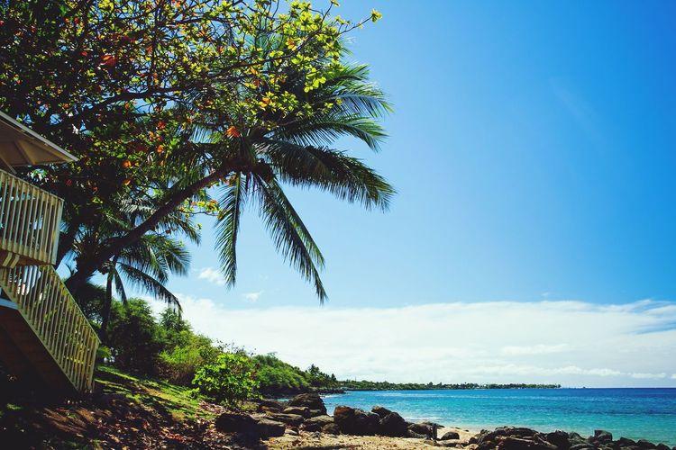 Lifeguard Hut Maui Beaches Palm Tree EyeEm Gallery Eye4photography  EyeEm EyeEm Selects EyeEmBestPics Plant Tree Water Sky Nature Beauty In Nature Sea Tranquility Day Scenics - Nature No People Tranquil Scene Beach Outdoors Sunlight