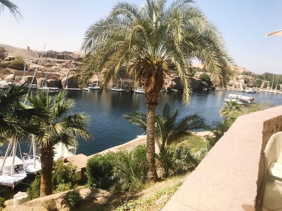 Palm Tree Water Nature Day Beauty In Nature Sunlight Clear Sky Aswan Egypt Beauty In Nature First Eyeem Photo The Great Outdoors - 2017 EyeEm Awards EyeEmNewHere