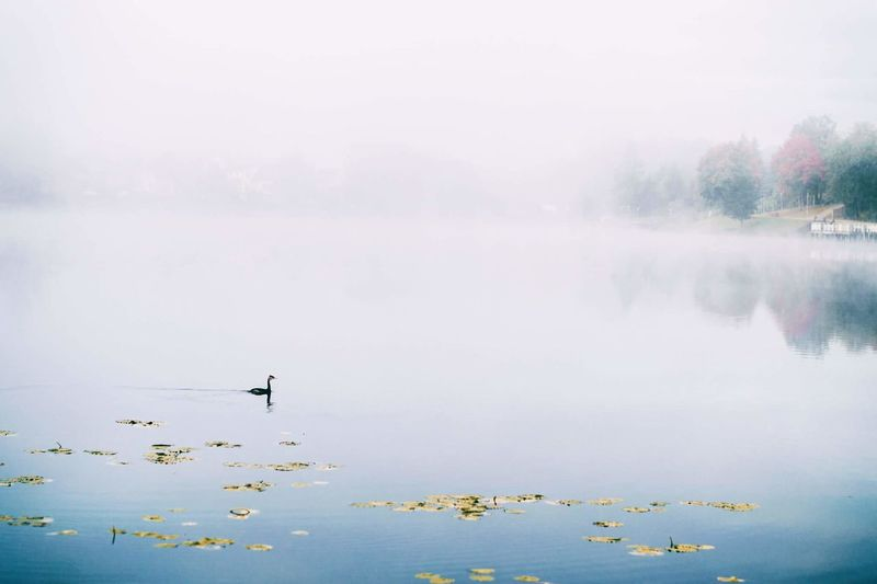 Water Fog Lake Floating On Water Nature Outdoors Day No People Beauty In Nature Cold Temperature Autumn Lighting