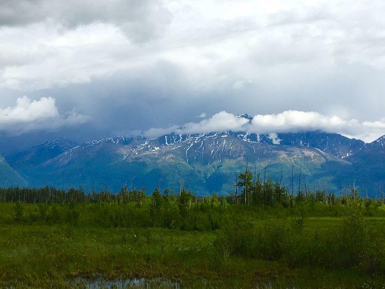 Gateway Alaska Tranquility Pine Tree Mountain Blue Sky Beautiful Alaska Wilderness