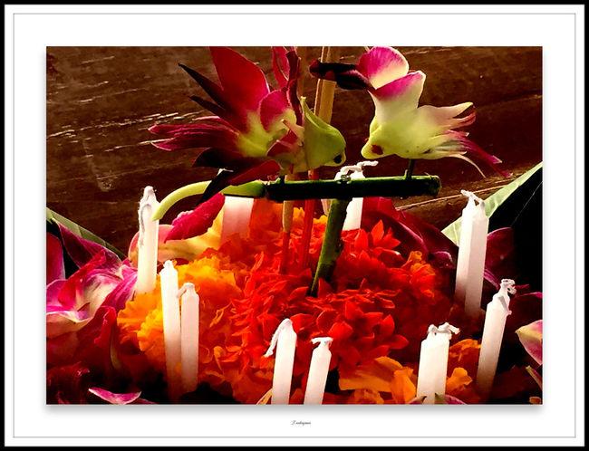 Candles Candle Candles.❤ Flowerporn Flower Collection Flowers,Plants & Garden Art, Drawing, Creativity My Art Art Yourself Handart