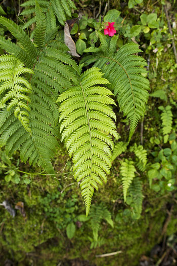 Beauty In Nature Close-up Day Fern Ferns Foliage Foliage Plant Fragility Freshness Green Color Growth Leaf Nature No People Outdoors Plant Tree