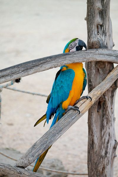 parrot Bird Animals In The Wild Perching Animal Themes One Animal Animal Wildlife Focus On Foreground Gold And Blue Macaw Tree Parrot EyeEm Nature Lover EyeEm Gallery Day No People Nature Beauty In Nature Outdoors Macaw Branch Close-up Summer Exploratorium
