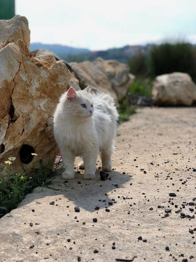 The beauty of nature Cat Like4like Follow4follow Mammal Animal Themes Animal One Animal Pets Domestic Animals Nature Domestic Land Vertebrate Day Sunlight No People Focus On Foreground Rock Solid Rock - Object Outdoors White Color Sky
