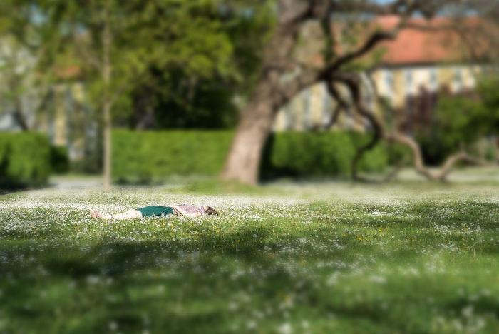 Day Grass Green Color Nature Outdoors Selective Focus Spring Springtime