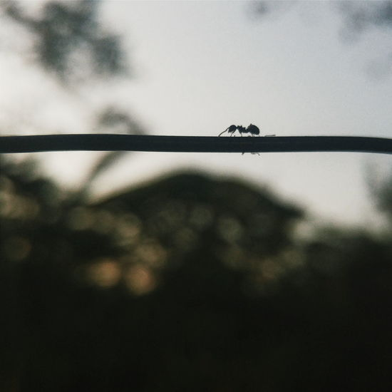 Eyeem Philippines Mobile Photography Lg G4 Photography LG G4 Silhouette Nature Blur Depth On Field Bokeh Insect Ant Nature's Diversities