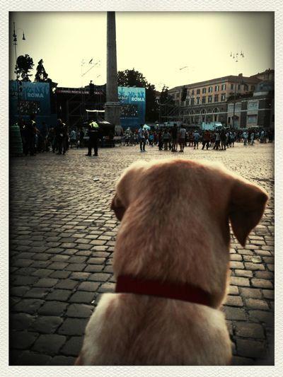 Una cucciola rock MyJoy Mydog Hard Rock Rome