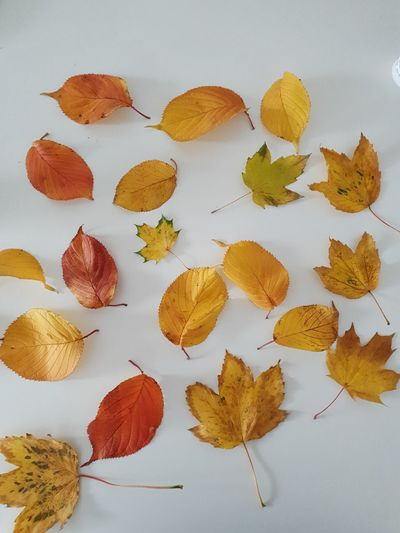 Close-up of autumn leaves on table