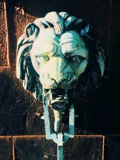 Pittsburgh Lion Chain EyeEmBestPics