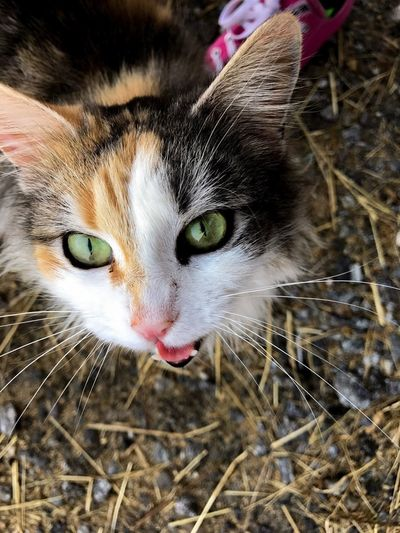 Domestic Cat Animal Themes Domestic Animals One Animal Mammal Pets Close-up Feline No People Outdoors Yellow Eyes Nature Day Pet Portraits