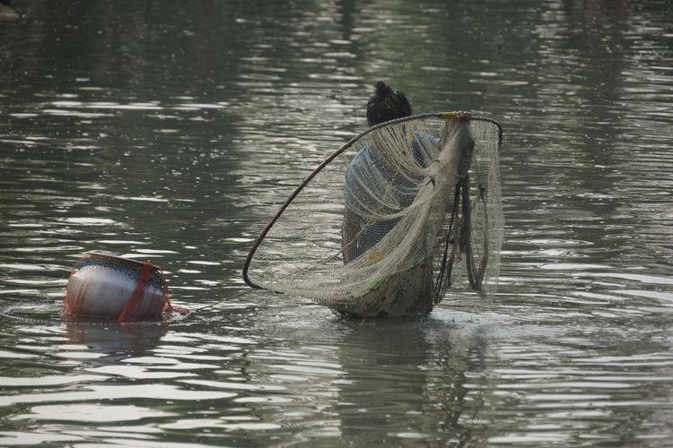 ferme aquatique Fishfarm Fishfillet Backwaters Water Fishing Tackle Fishing Net Lake Fishing Small Business Heroes