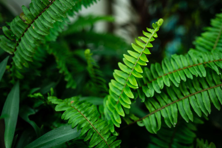 Beauty In Nature Close-up Day Fern Focus On Foreground Forest Fragility Freshness Green Color Growth Land Leaf Natural Pattern Nature No People Outdoors Plant Plant Part Selective Focus Tree