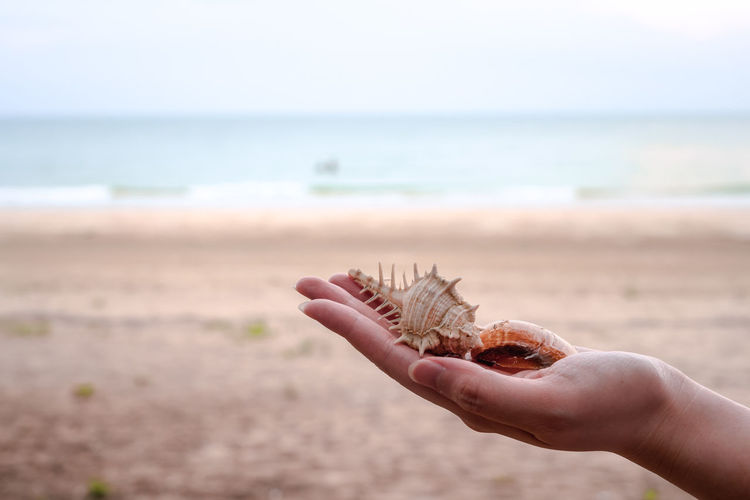 Cropped image of person hand holding sea water on beach