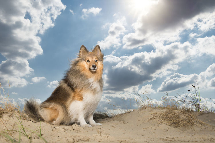 Dog on a field