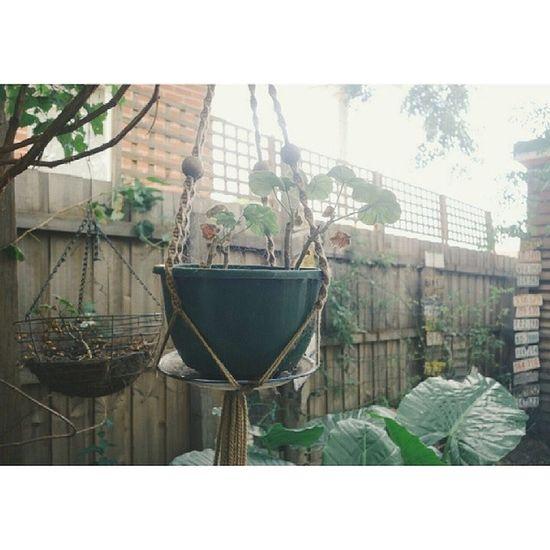 Plants Garden VSCO Vscocam green