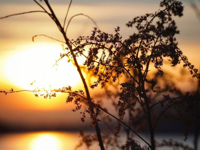 Dreaming of summer Sunset Beauty In Nature Tree Scenics Outdoors Shades Of Winter Sky