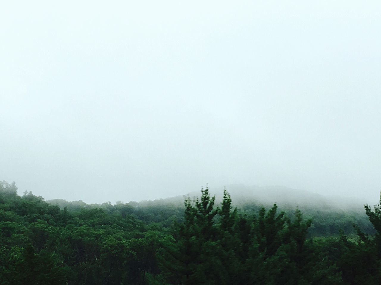 tree, nature, fog, tranquility, beauty in nature, tranquil scene, landscape, mist, copy space, no people, forest, scenics, growth, day, outdoors, hazy, mountain, sky