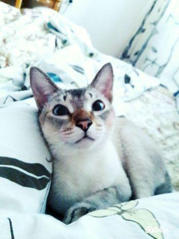Самый мой любимый пупсяш Enjoying Life Spb Котик Beutiful  Home Relaxing Good Morning