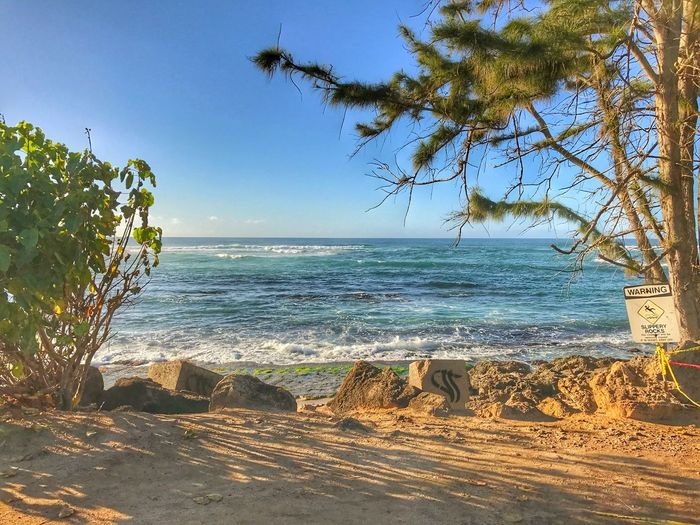 North Shore Oahu Sea Water Beach Land Sky Beauty In Nature Horizon Over Water Horizon Nature Tree Scenics - Nature Tranquility Plant Day Tranquil Scene No People Clear Sky Sand Sunlight Outdoors