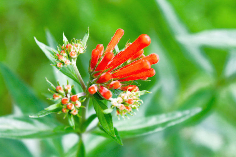 Usame para brillar Beauty In Nature Blooming Blossom Botany Bud Close-up Day Flower Flower Head Focus On Foreground Fragility Freshness Green Color Growth In Bloom Nature No People Outdoors Petal Plant Pollen Red Selective Focus Stamen Stem